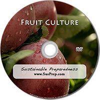 Fruit Culture
